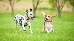 8 věcí, které nemůžete svému psovi upřít