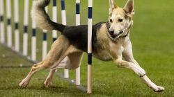 Ze života psa: Jak správně trávit den s hyperaktivním psem?