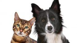 Proč existuje mnohem větší variabilita psích plemen, než kočičích ?