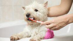 Čistit pejskovi zuby se vyplatí. Prodloužíte mu život až o pět let!