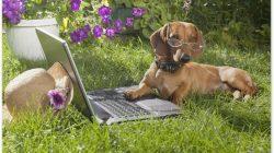 5 typických znaků, podle kterých poznáte inteligentního psa!
