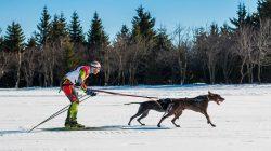 Zimní romantika se psem – skijörging