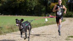 Začněte se věnovat sportu s vaším psem – Canicross