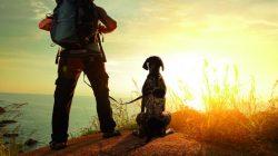 """Jste """"outdoorák"""" a máte psa? Zkuste dogtrekking – sport, který prohloubí váš vztah"""